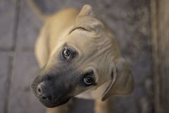 Rescue puppy portrait stock photography