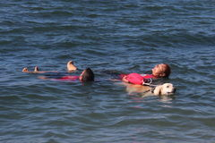 Rescue at sea with dogs. Images of dogs that rescue swimmers in difficulty Royalty Free Stock Photography