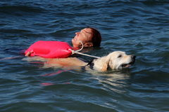 Rescue at sea with dogs. Images of dogs that rescue swimmers in difficulty Royalty Free Stock Images