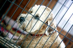 Rescue Shaggy Dog Stock Images