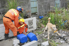 Rescue team. Rescue dog find pretended victim and bark for Royalty Free Stock Images