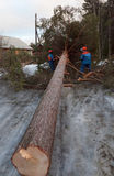 Rescue workers removed the tree from the road after Hurricane Stock Images