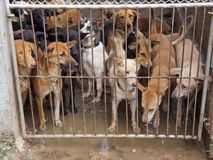 Rescued dogs from meat mafia Stock Photo