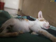 Rescued stray kitten. A stray kitten that have been rescued recently slept comfortably for the first time Royalty Free Stock Photos