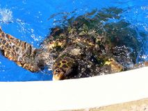 Rescued turtle Stock Photo