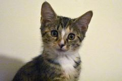 Kitten - Rescued at 10 Weeks stock image