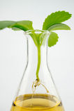 Research and development, lab test plant Royalty Free Stock Images