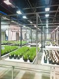Research Greenhouse Facility with rows of plant experiments. Greenhouse in a biotech agricultural research facility with rows of plants Stock Photography
