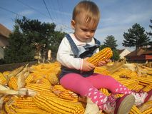 Research and little girls first encounter with of corn stock photo