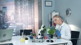 Research scientist in safety glasses learning under magnifying glass the plant leaves structure stock footage