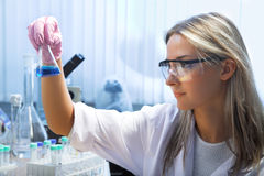 Researcher. Female researcher look at retort with blue liquid Stock Image