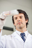 Researcher Analyzing Microplate In Lab Stock Photos