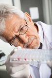 Researcher Analyzing Microtiter Plate Stock Photos