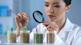 Researcher analyzing pea grain properties with magnifying glass, crop breeding. Stock photo royalty free stock photo