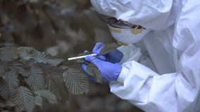 Researcher analyzing radioactive leaf color, pollution level, forest poisoning