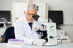 Researcher Examining Microscope Slide In Lab Stock Images
