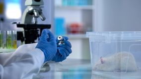 Researcher filling syringe with liquid for injection new medicine testing on rat royalty free stock photos