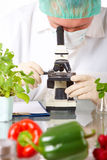 Researcher with GMO vegetable Stock Photos