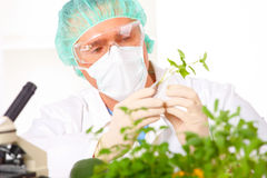 Free Researcher Holding Up A GMO Vegetable In The Lab Royalty Free Stock Photos - 13592198