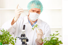 Researcher holding up a GMO plant in the lab Stock Images
