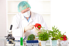 Researcher holding up a GMO vegetable royalty free stock image