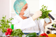 Researcher holding up a GMO vegetable Stock Photos
