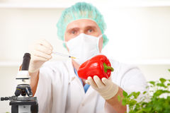 Researcher holding up a GMO vegetable Royalty Free Stock Photo