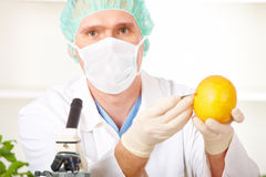 Researcher holding up a GMO vegetable Royalty Free Stock Images