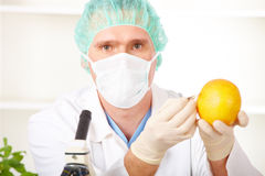Researcher holding up a GMO vegetable in the lab Stock Image