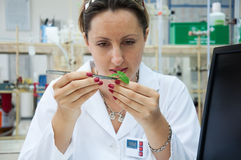 Researcher holds leaf Royalty Free Stock Photos