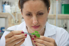 Researcher holds leaf Royalty Free Stock Image