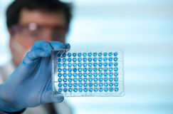 Researcher in the laboratory holding samples in microplate Royalty Free Stock Image