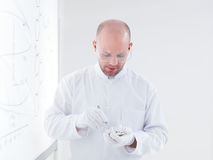 Researcher laboratory pill analysis Stock Photos