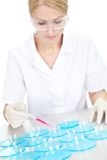 Researcher making an expering using petri dishes Stock Photo