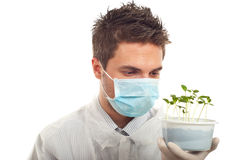 Researcher man holding new cucumber plants Stock Images