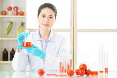 Researcher and microscope with a GMO tomato Stock Photography