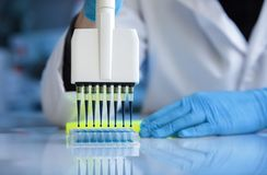 Biochemical engineer working with fluid samples in plate multi well in the laboratory. Researcher pipetting samples in plate with multi well in the clinical lab stock images