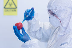 Researcher in protective suit injecting tomato at lab Stock Photography