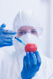 Researcher in protective suit injecting tomato at lab Royalty Free Stock Images
