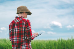 Researcher using digital tablet in wheat crop field Royalty Free Stock Photos