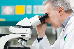 Researcher using a microscope in a laboratory. Man using a microscope in a laboratory Royalty Free Stock Image