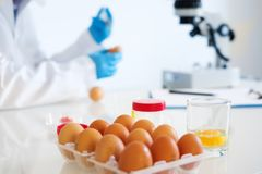 Researcher wearing white coat analyzing quality of GMO eggs about avian flu. Fresh egg sample quality control in laboratory microscope analysis , main focus on Royalty Free Stock Photos
