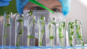 Researcher Wet Plant Seedling Biological Research Genetic Engineering Laboratory.  stock footage