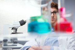 Researcher at work Stock Photography