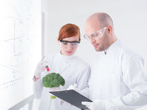 Researchers injecting broccoli Stock Photography