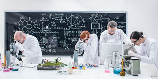 Researchers under microscope analysis Royalty Free Stock Photo
