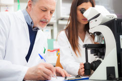 Researchers at work Stock Photo