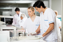 Researchers Working In Laboratory Royalty Free Stock Photography