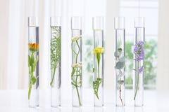 ResearchPants della medicina di erbe in provette Immagine Stock Libera da Diritti