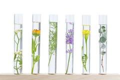 ResearchPants della medicina di erbe in provette Fotografia Stock Libera da Diritti